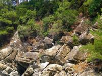 forest and sea thasos